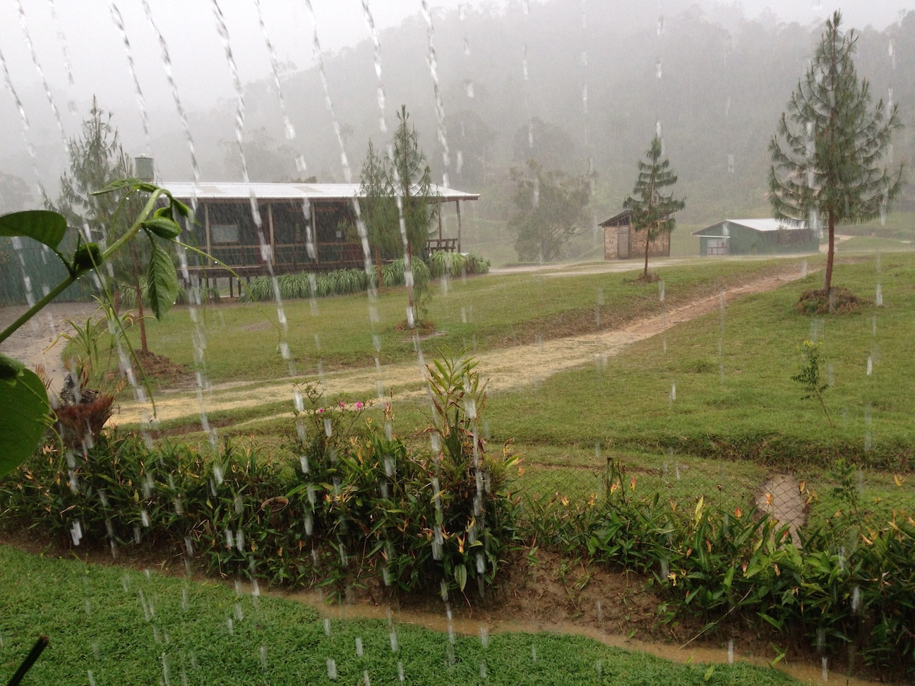 We live in a rainforest--with the emphasis on rain.
